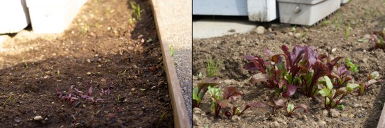 Vegetable Growth Progress