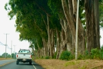 Large Trees along roadway
