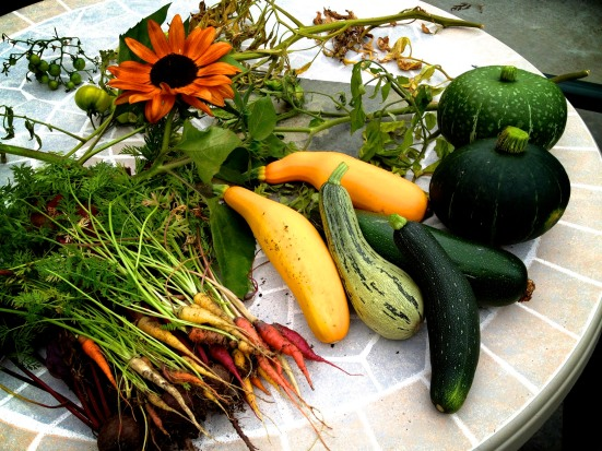 rainbow carrots, beets, yellow squash, zucchini, buttercup squash, sunflower