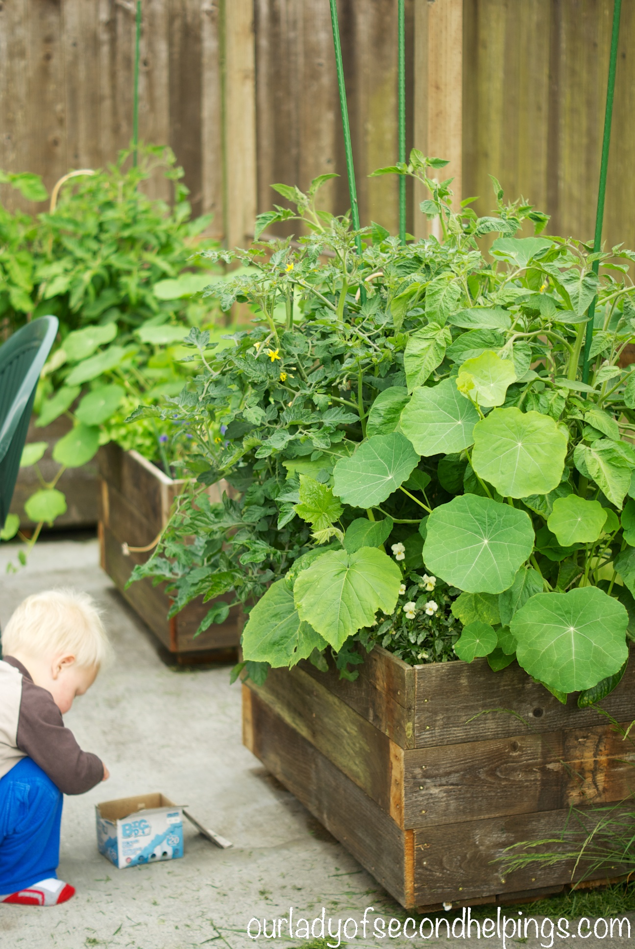 Child crouched infront of vegetable garden