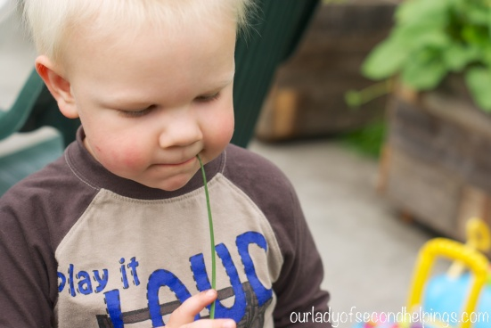 child chewing on a chive stalk