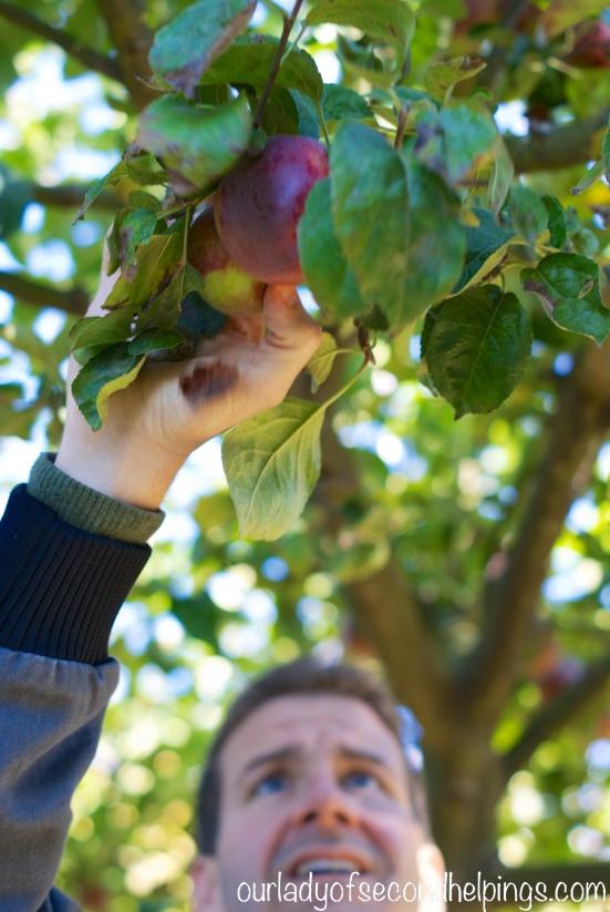 Man reaching to pick an apple