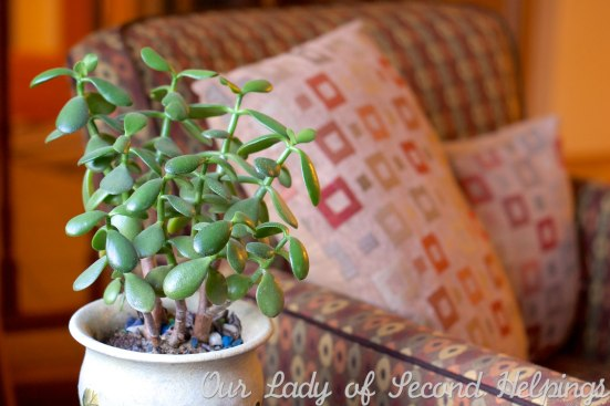 Adopt a Houseplant for Earth Day | Our Lady of Second Helpings